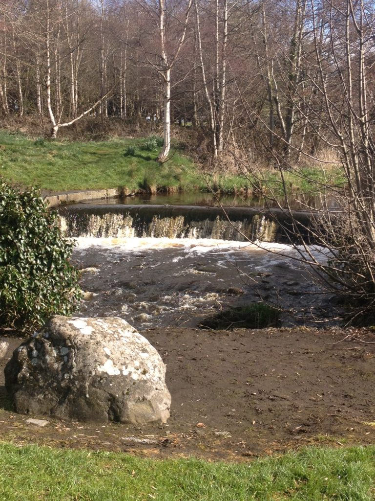 Lali - park in Athenry